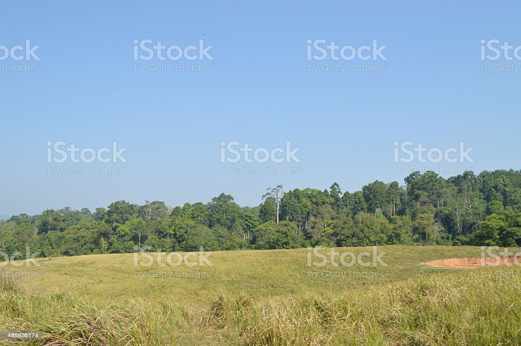 Khoa yai national park Thailand stock photo