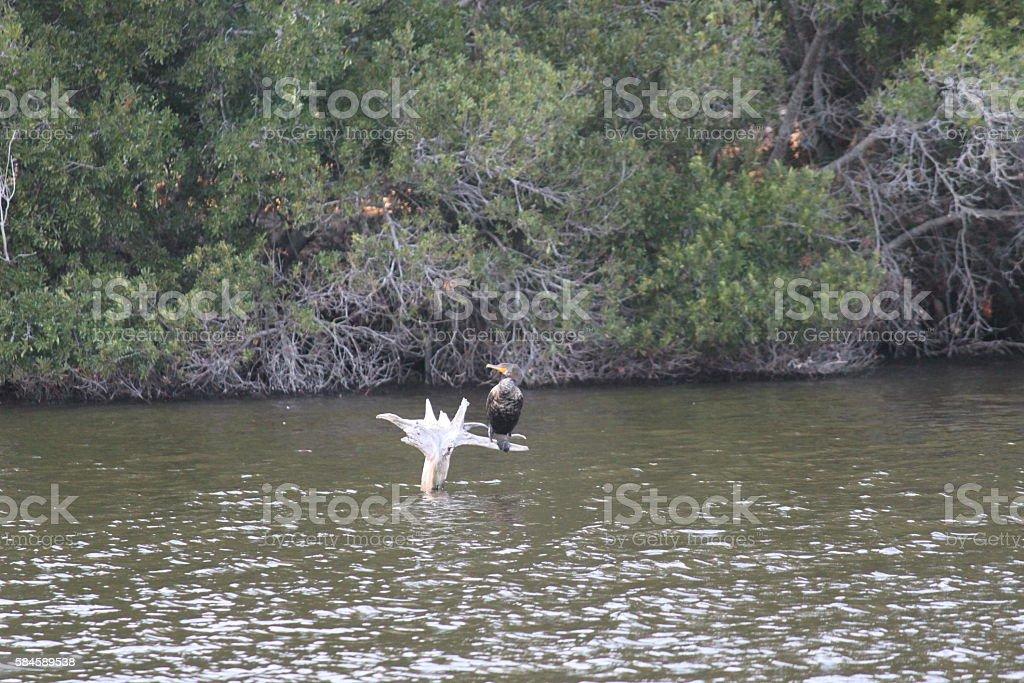 Kiawah Island stock photo