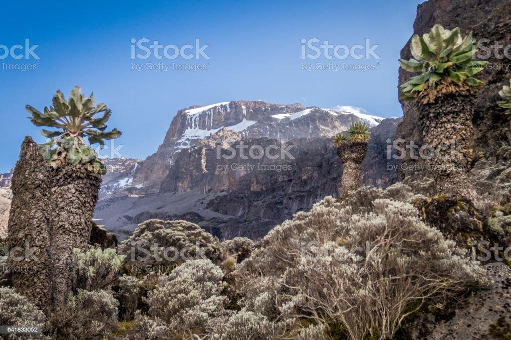 Kibo peak in Mount Kilimanjaro stock photo