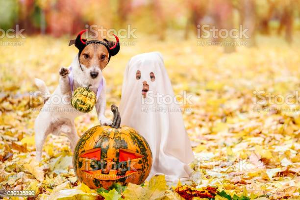 Kid and dog dressed in halloween costumes with jack o lantern picture id1036335890?b=1&k=6&m=1036335890&s=612x612&h=hegmgxe272wxlhhusmszbcert0 hmgrxsyx4mhudgha=
