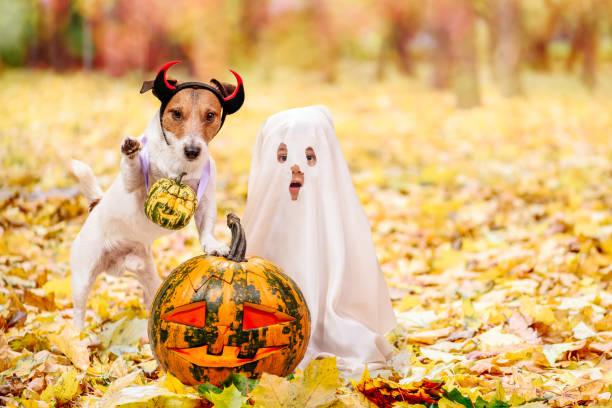 kind und hund in halloween-kostümen gekleidet mit jack o ' lantern kürbisse - kleine jungen kostüme stock-fotos und bilder