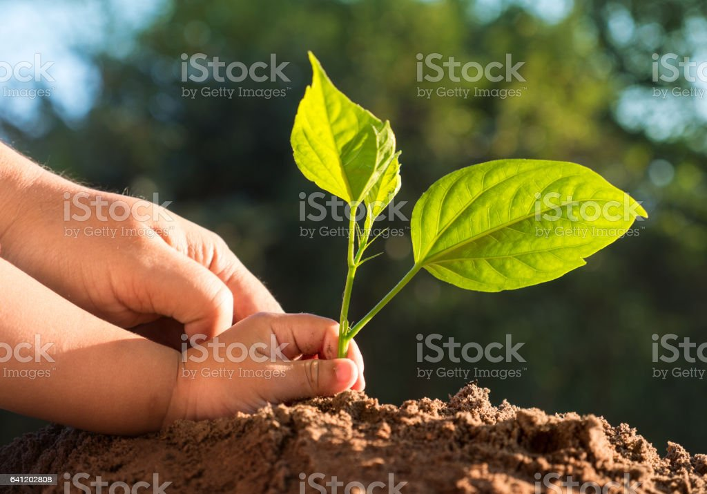 Kid and father hands planting young tree over green background stock photo