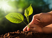 istock Kid and father hands planting young tree over green background 671188068