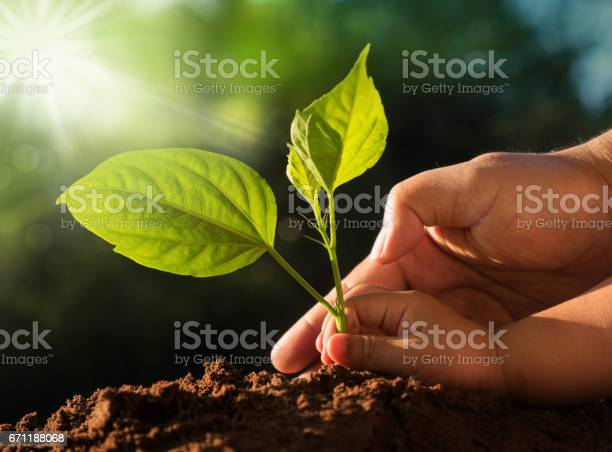 Kid and father hands planting young tree over green background picture id671188068?b=1&k=6&m=671188068&s=612x612&h=nfzlca6cdh6gs5fxv8y zqhhgs9j vn auwpr33hu98=