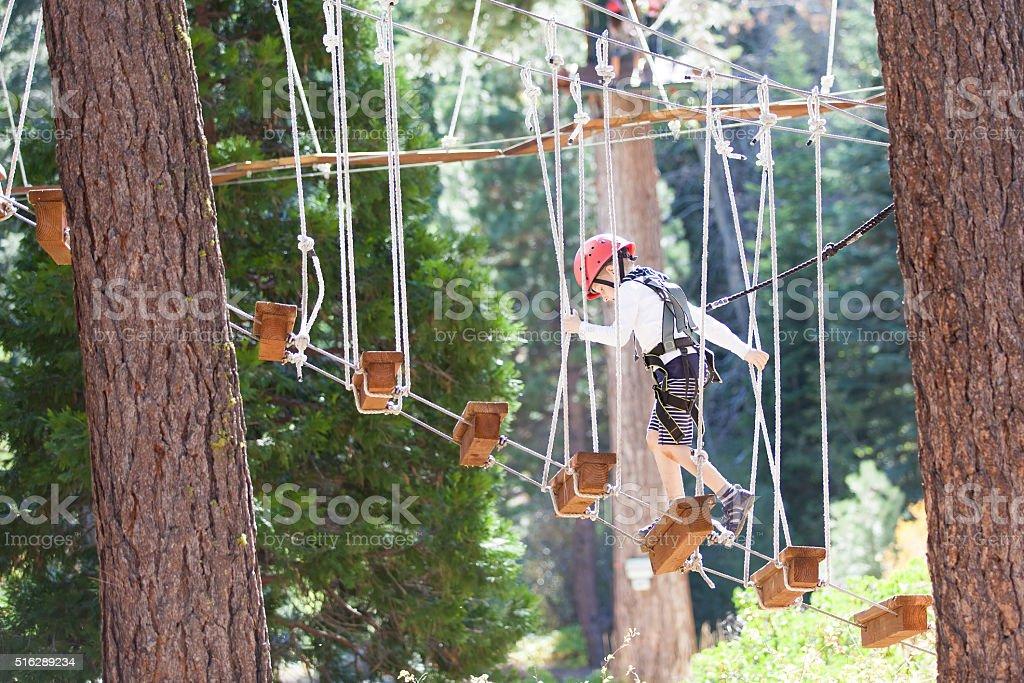 bengel im Baumwipfel-park – Foto