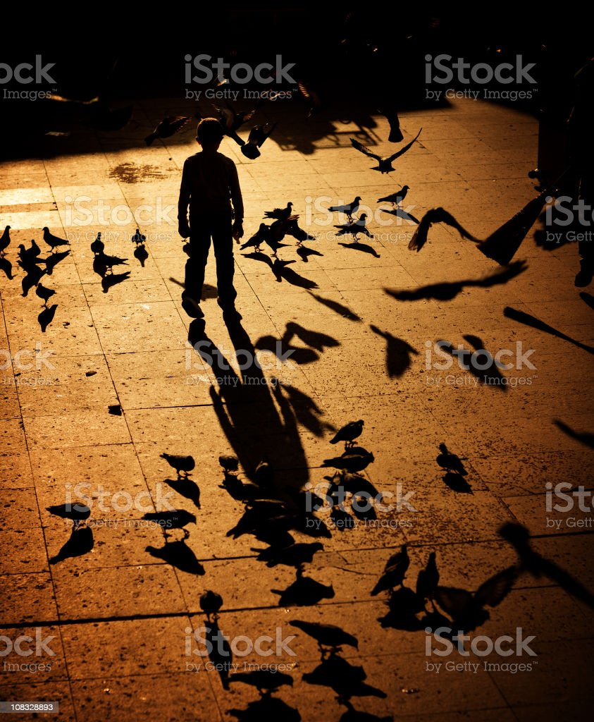 kid chasing pigeons stock photo