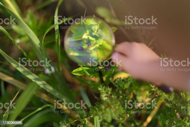 Kid exploring nature with magnifying glass little boy looking at picture id1130066866?b=1&k=6&m=1130066866&s=612x612&h=k03tff9bw iqgqfr  5s7ommney920jlf5ji8tcjj6s=