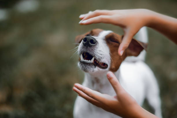 Kid gently caresses her dog hands are closed on the dog's muzzle snout stock pictures, royalty-free photos & images