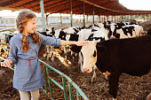 kid girl feeding calf on cow farm. Countryside, rural living, agriculture concept