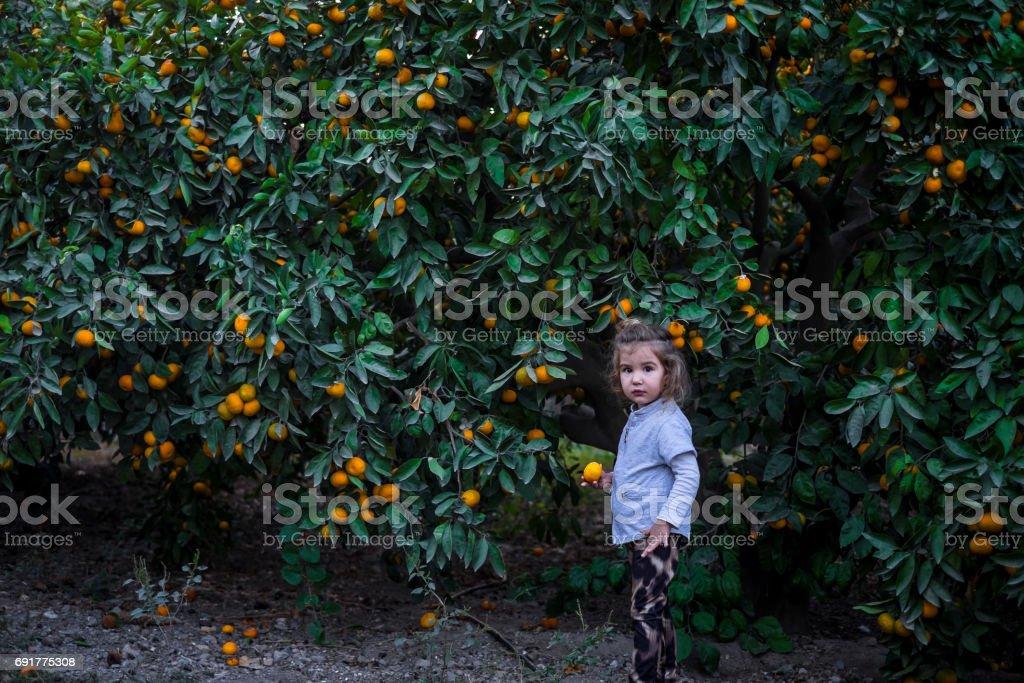kid girl mandarin stock photo