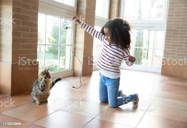 Kid girl playing with cat holding cable picture id1175329855?b=1&k=6&m=1175329855&s=612x612&h=4q6nzsj30adoyoonnpmg9iuo9hh2dqx3njalajhnpfi=
