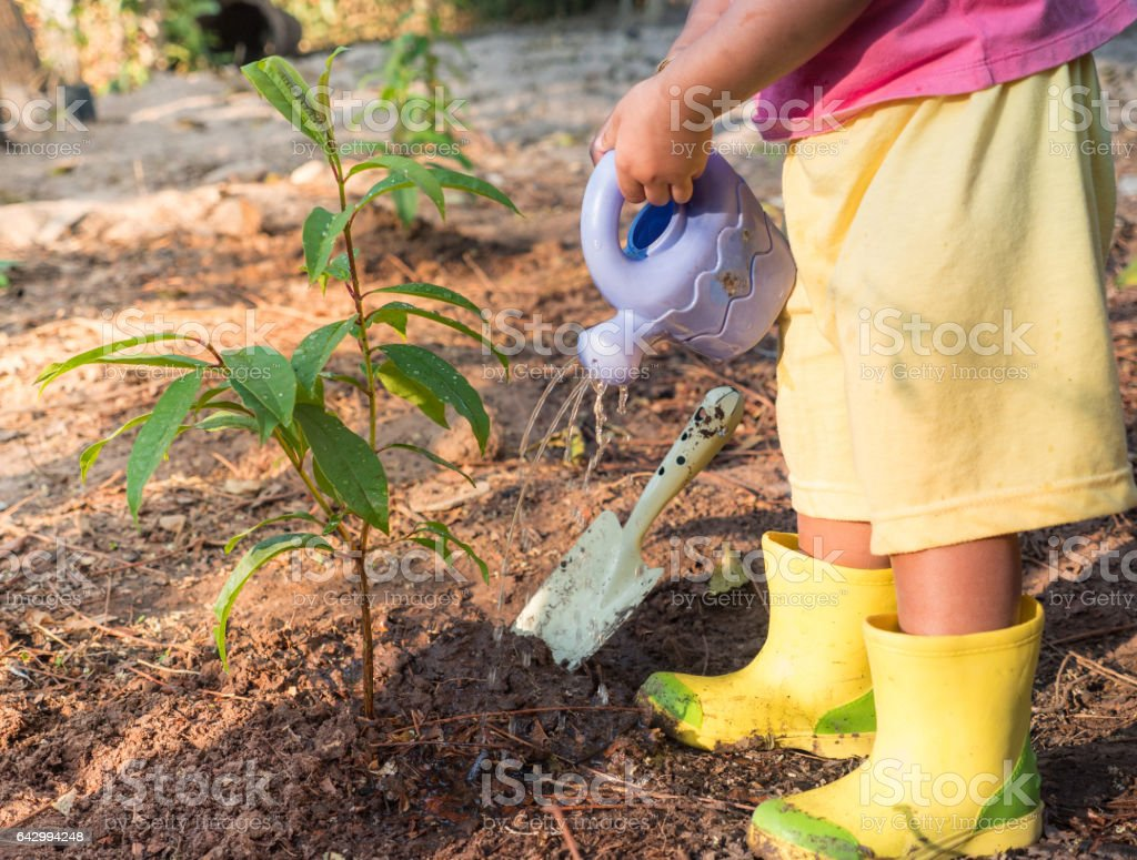 Kid giving water after planting young tree stock photo
