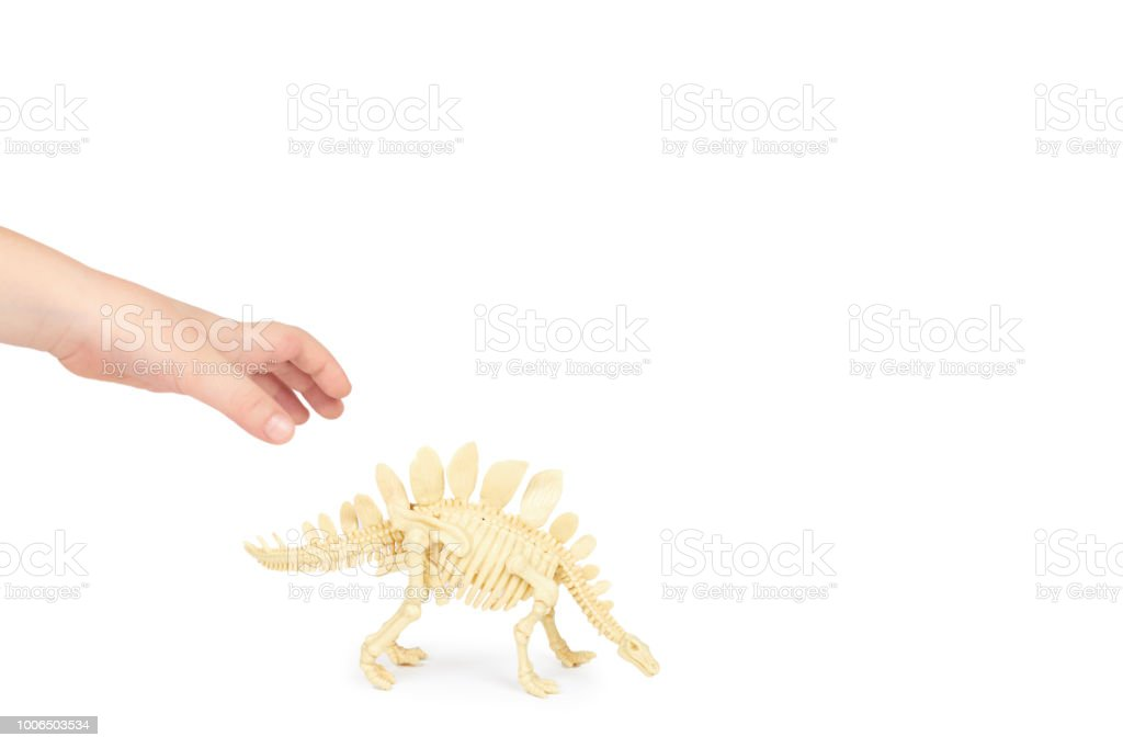 Kid Hand Hold Dinosaur Skeleton Toy Isolated On White Background Copy Space Template Royalty