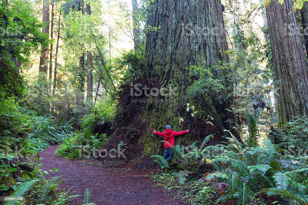 kid in redwood forest stock photo