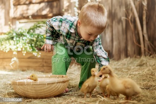 Kid is playing with a bunny, duckling, chicken