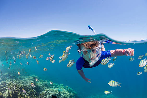 Kid on the reef Child snorkeling over colorful tropical reef underwater diving stock pictures, royalty-free photos & images