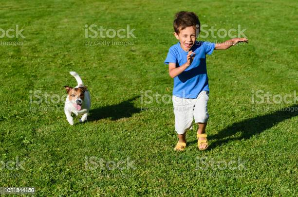Kid playing with dog on green grass lawn dashing and racing picture id1021844156?b=1&k=6&m=1021844156&s=612x612&h=tlfmq3447b r3gqs1pcpdk dgv9cap zn i0gsih26k=