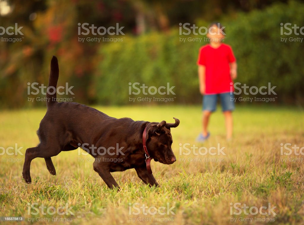 kid playing with his dog royalty-free stock photo