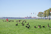 Kid running through gooses at the Liberty State Park during summer day