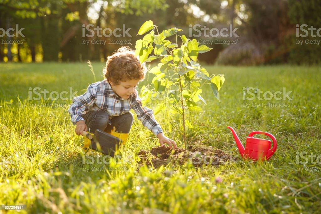 Enfant en prenant soin de l'arbre dans le jardin photo libre de droits