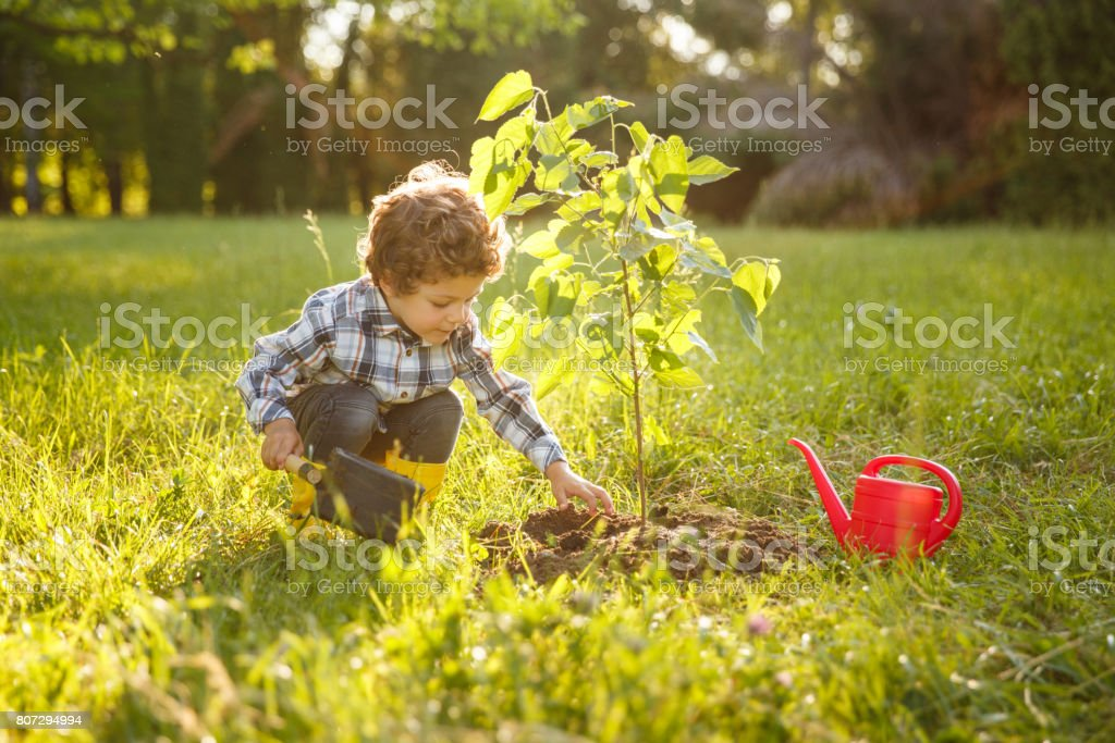 Kid taking care of tree in garden stock photo
