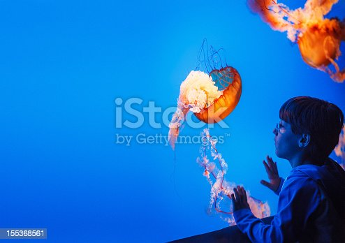 nine years old kid watching jellyfish (sea nettle) at the aquarium