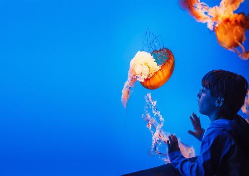 kid watching jellyfish at the aquarium