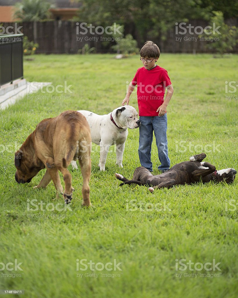 kid with 3 dogs in the backyard stock photo 174810411 istock