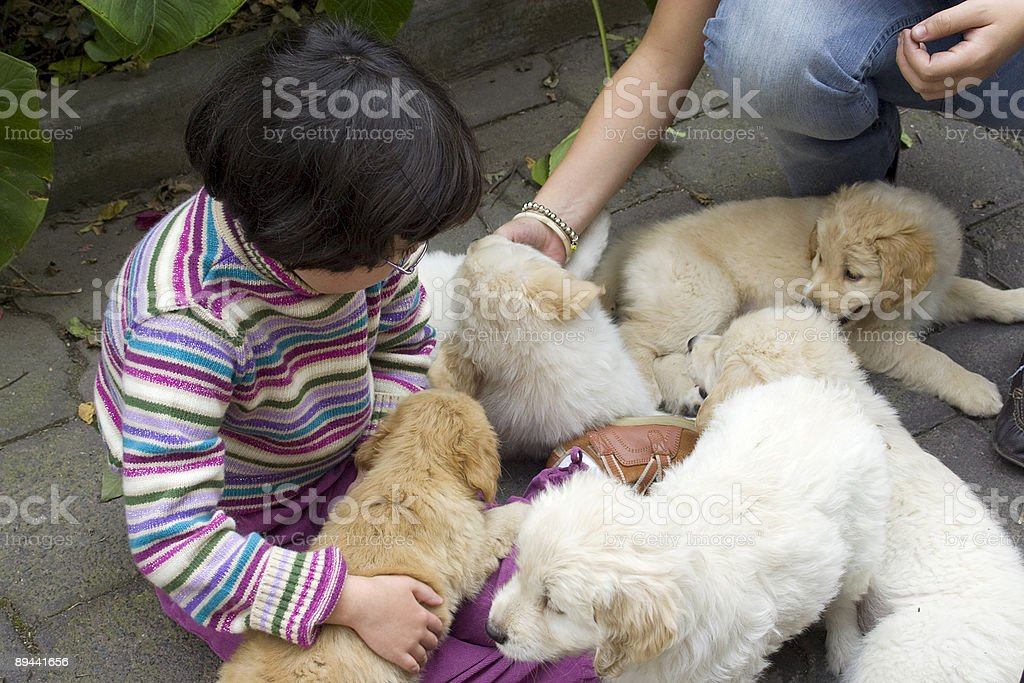 Dziecko z psami zbiór zdjęć royalty-free