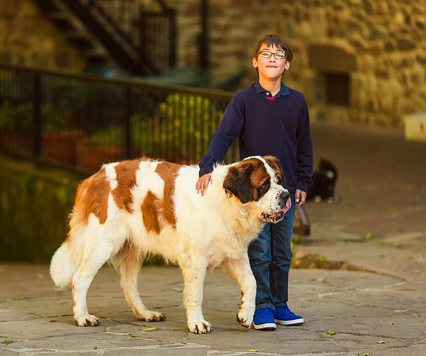 kind mit st. bernard hund - bernhardiner stock-fotos und bilder