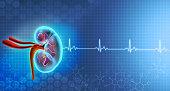 istock Kidney anatomy on medical background 1250937238