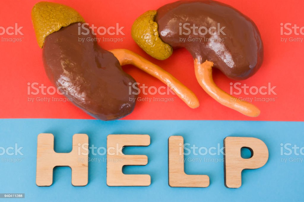 Kidneys with Help word. Anatomical model of kidney and adrenal gland is on red background, below letters that make word Help on blue background. Medical care, diagnosis, treatment for organ stock photo
