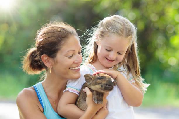 enfants et animaux de la ferme. enfant avec cochon de bébé au zoo. - animaux familiers exotiques photos et images de collection