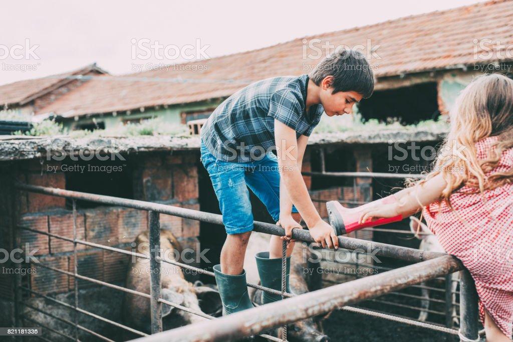 Kids climbing on a pigsty's railing stock photo