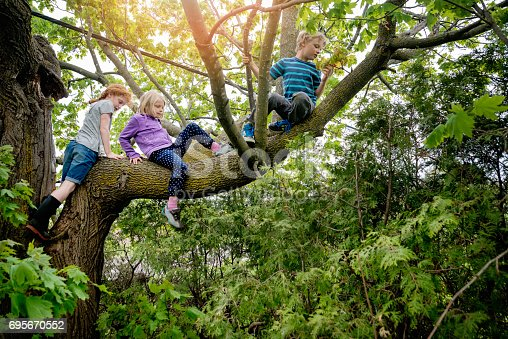 Three elementary age kids climbing an old tree. But it is very high and they need to be very careful. Horizontal full length outdoors shot with copy space and sun flare. This was taken in Qebec, Canada.