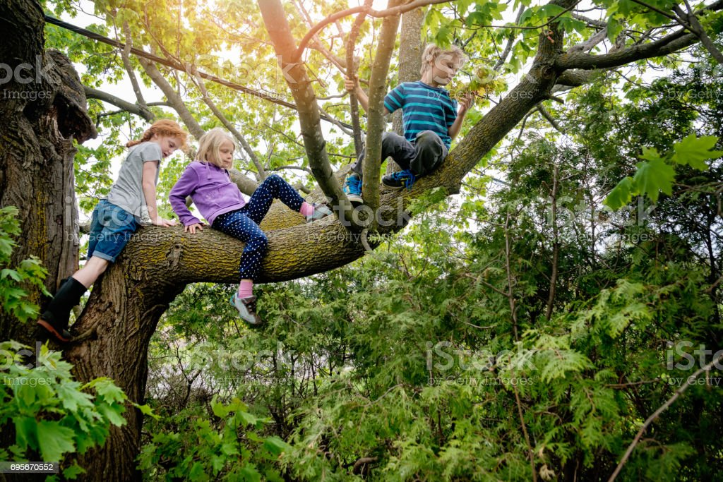 Kids climbing very high tree in sprintime. stock photo