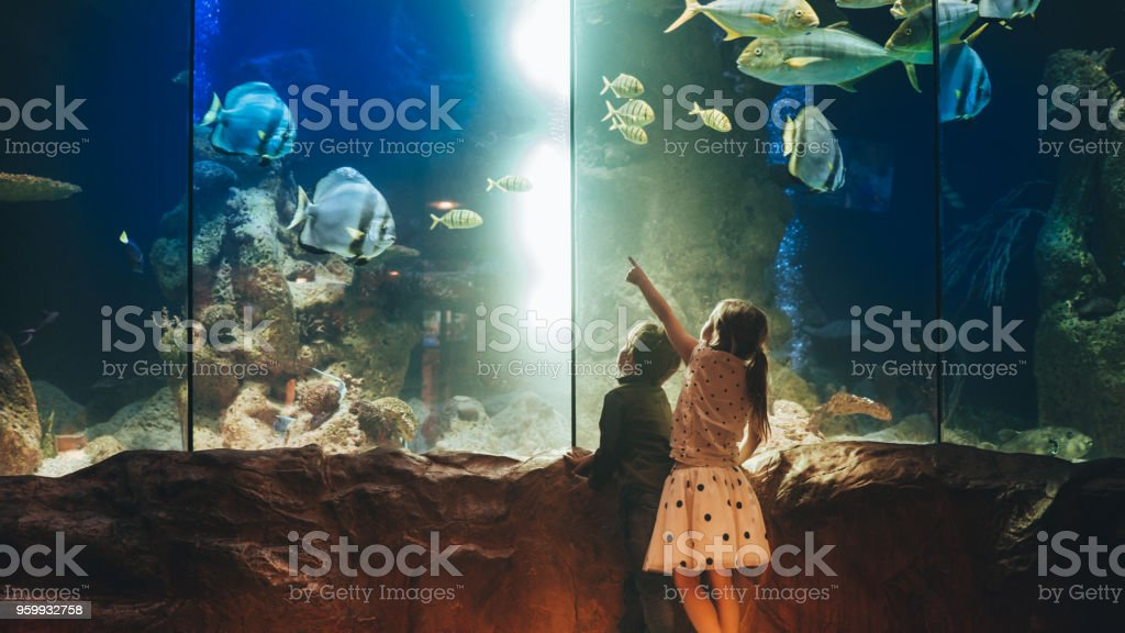 Kids discovering underwater world stock photo