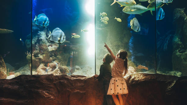 Kids discovering underwater world Photo of a two children, discovering underwater world in an aquarium // wide photo dimensions aquarium stock pictures, royalty-free photos & images