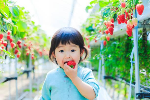 Kinder essen Erdbeeren – Foto