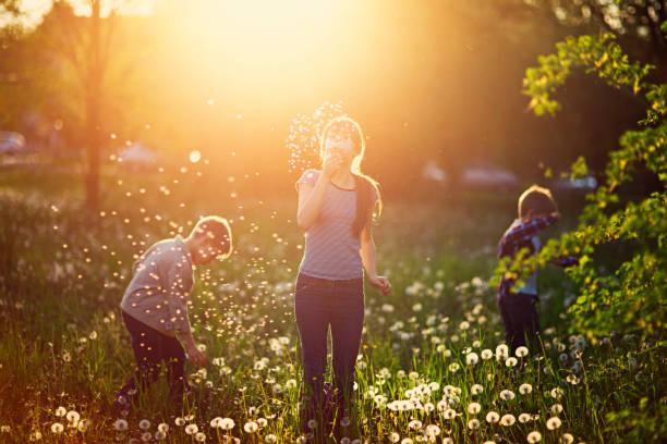 kids enjoying spring dandelions - pyłek zdjęcia i obrazy z banku zdjęć