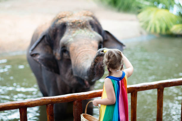 Kids feed elephant in zoo. Family at animal park. Family feeding elephant in zoo. Children feed Asian elephants in tropical safari park during summer vacation in Singapore. Kids watch animals. Little girl giving fruit to wild animal. zoo stock pictures, royalty-free photos & images