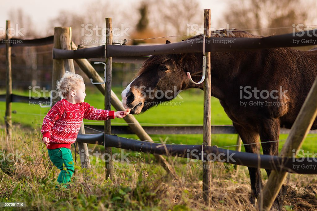 Kids feeding horse on a ranch on cold fall day stock photo