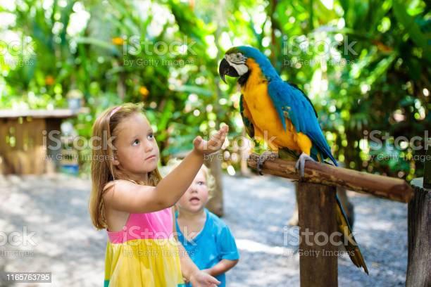Kids feeding macaw parrot child playing with bird picture id1165763795?b=1&k=6&m=1165763795&s=612x612&h=4ucjfxhswwitabh58esw9ftjn53kaqzojw0piqhhn4o=