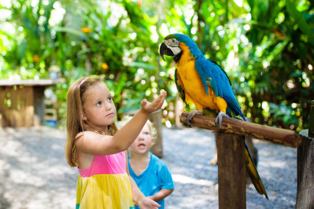 Kids feeding macaw parrot. Child playing with bird stock photo