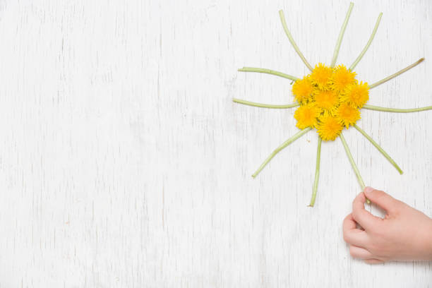 Kids hand and small yellow sun made of dandelions on the white wooden picture id1047262338?b=1&k=6&m=1047262338&s=612x612&w=0&h=hrj7pfvwatn6att5 3ofyfqpmbzo1y1wsuzif582p0e=