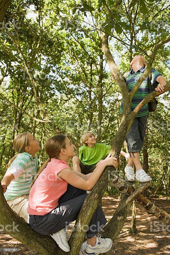 Crianças em uma floresta foto de stock royalty-free