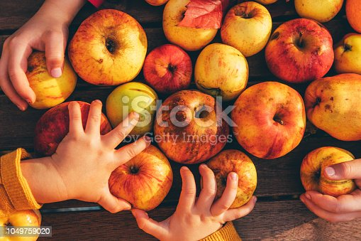 865889676 istock photo Kids in an orchard collect apples 1049759020