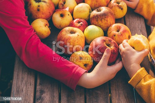 865889676 istock photo Kids in an orchard collect apples 1049759058