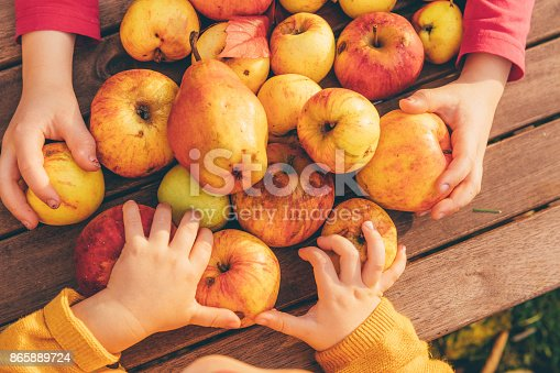 865889676 istock photo kids in an orchard collecting apples and pears 865889724