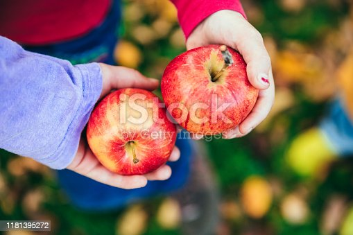 865889676 istock photo Kids in an orchard holding red apples 1181395272